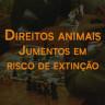 9 de novembro: Direitos animais - Jumentos em risco de extinção